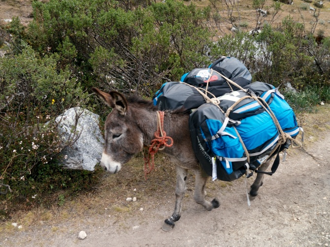 A donkey plods along laden with our gear